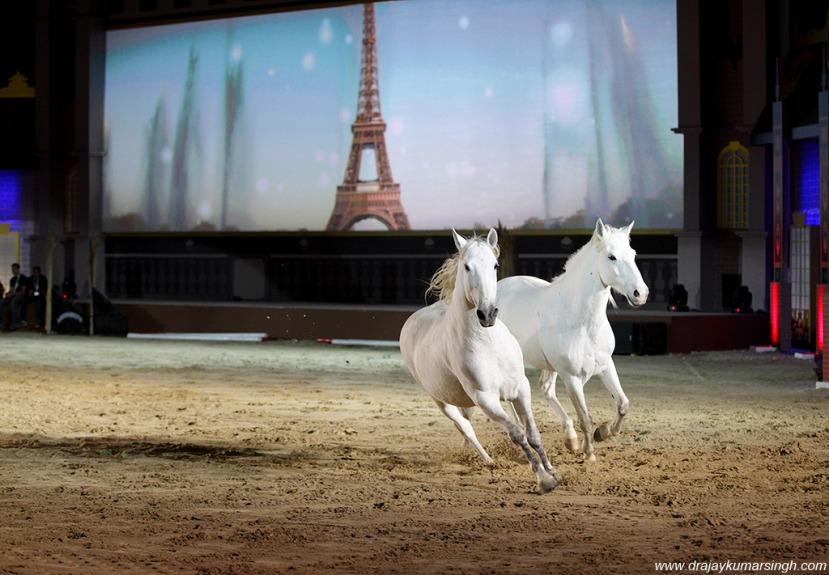 Lusitano horses